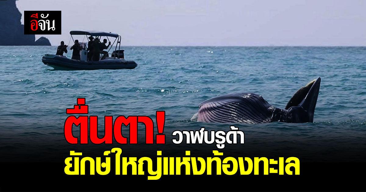 ยักษ์ใหญ่แห่งท้องทะเล วาฬบรูด้า โผล่หมู่เกาะอ่างทอง จ.สุราษฎร์ธานี