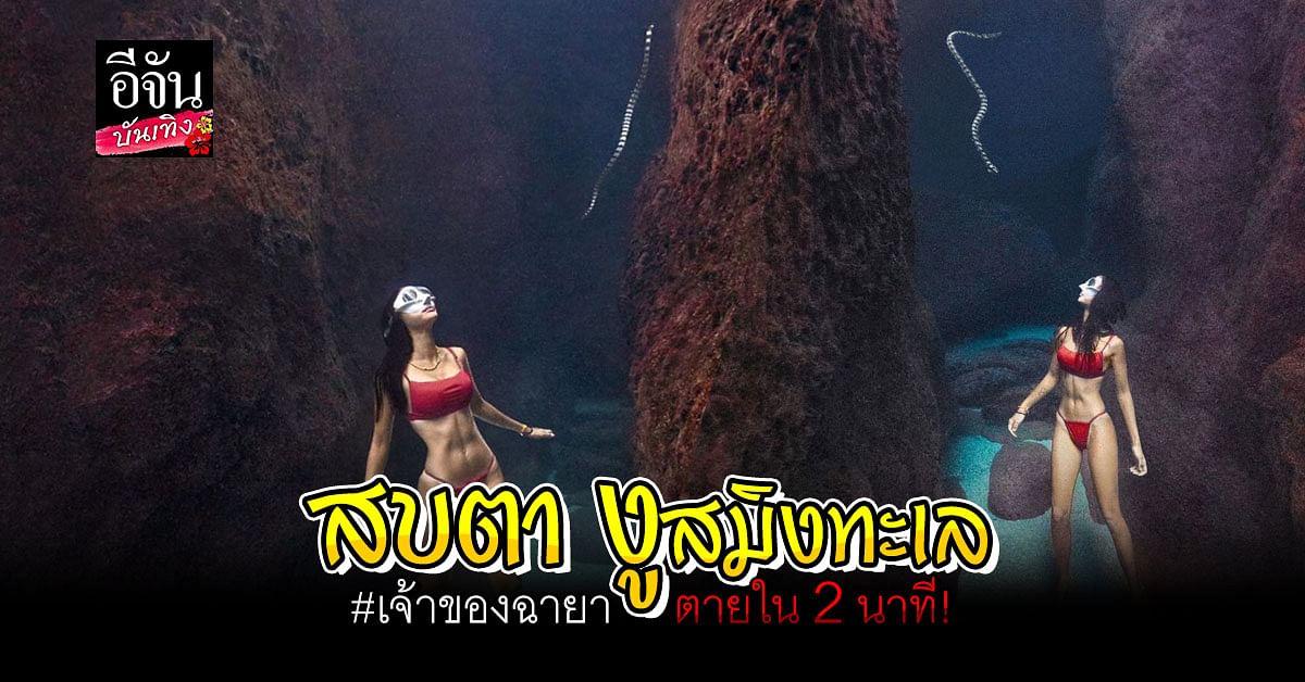 นท พนายางกูร อวดภาพดำน้ำเหยียบท้องทะเล พร้อมแขกที่ไม่ได้รับเชิญ