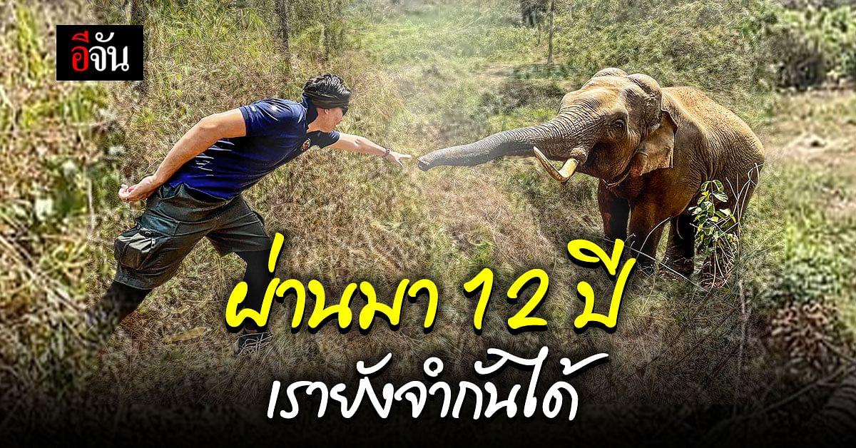 สุดประทับใจ! ช้างป่า จำคุณหมอที่เคยรักษาให้ได้ แม้จะผ่านมาแล้วกว่า 12 ปี