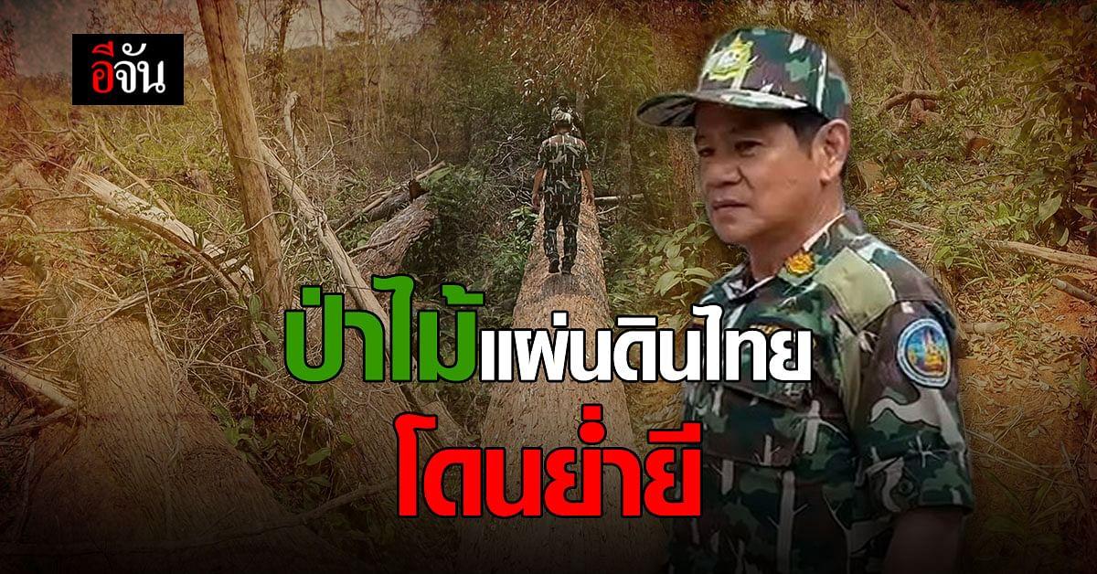 ป่า แผ่นดินไทย โดนย่ำยี สะเทือนหัวใจ ผู้พิทักษ์ป่า