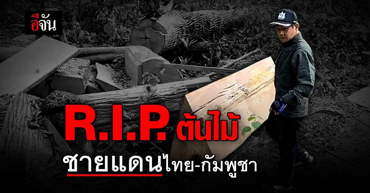 สำนึกคน อยู่ใต้อำนาจเงิน? ชายแดนไทย กัมพูชา ต้นไม้ ถูกโค่นเกือบ 100 ต้น... เห็นแล้วสลด
