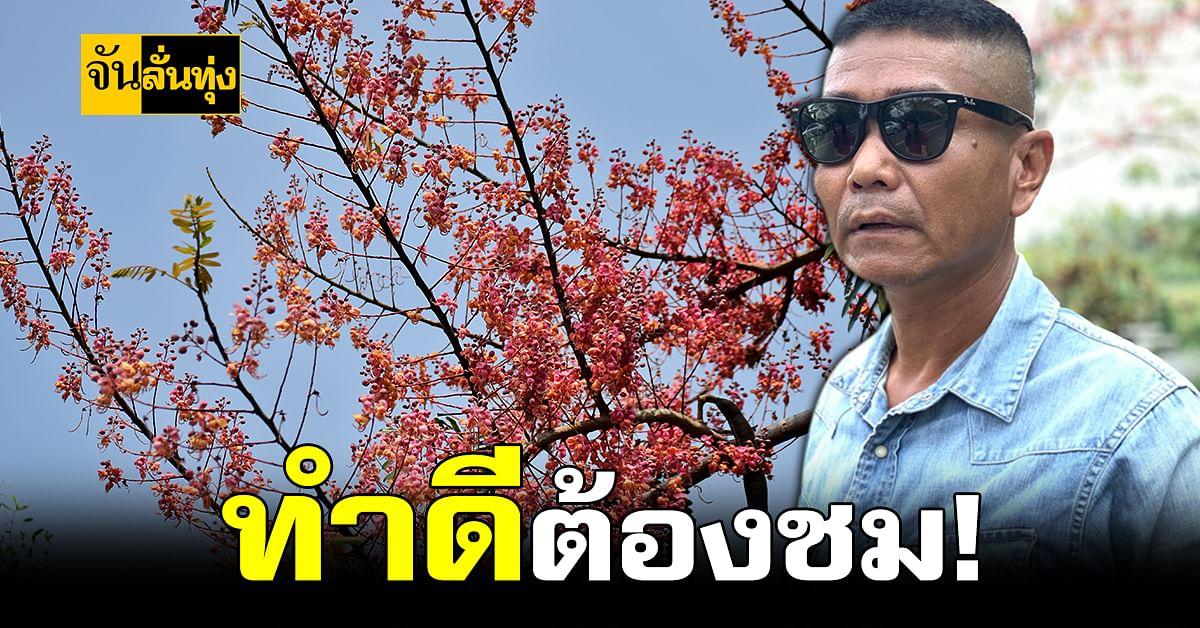 ดาบตำรวจตราด ทุ่มเงินกว่าล้านบาท ปลูก ซากุระเมืองไทย เพื่อส่วนรวม