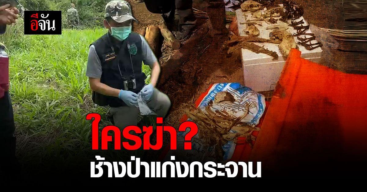 เจออีก 2 ซาก ช้างป่าแก่งกระจาน ฝีมือใครฆ่า?