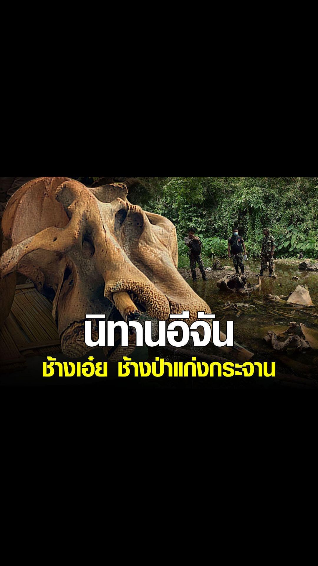 อีจัน - สตอรี่ นิทานอีจัน เรื่อง ช้างเอ๋ย ช้างป่าแก่งกระจาน