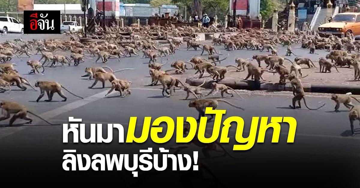 ชาวบ้านลพบุรี วอน กรมอุทยานฯ หันมองปัญหา ลิงลพบุรี  บ้าง