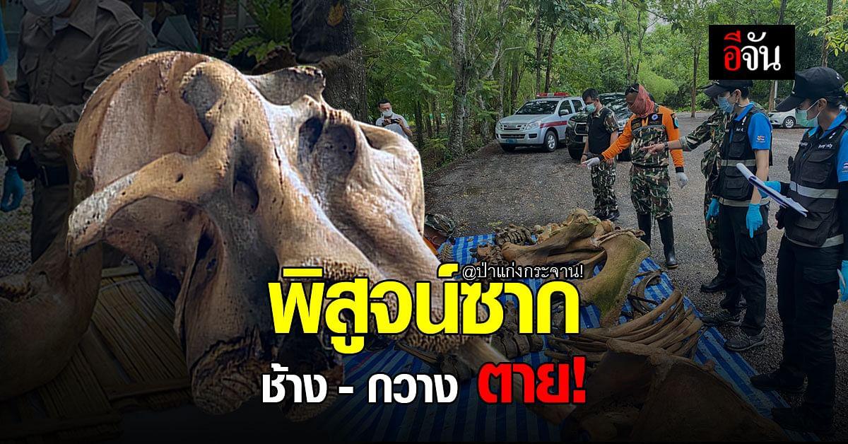อช.แก่งกระจาน ลงพื้นที่พิสูจน์ ซากช้าง - ซากกวาง ตายคาป่าแก่งกระจาน