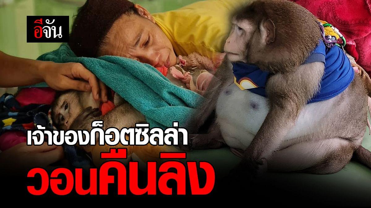 (Video) เจ้าของก็อตซิลล่า วอนคืนลิง