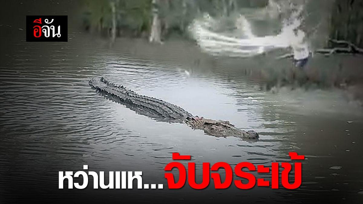(Video) หว่านแห...จับจระเข้