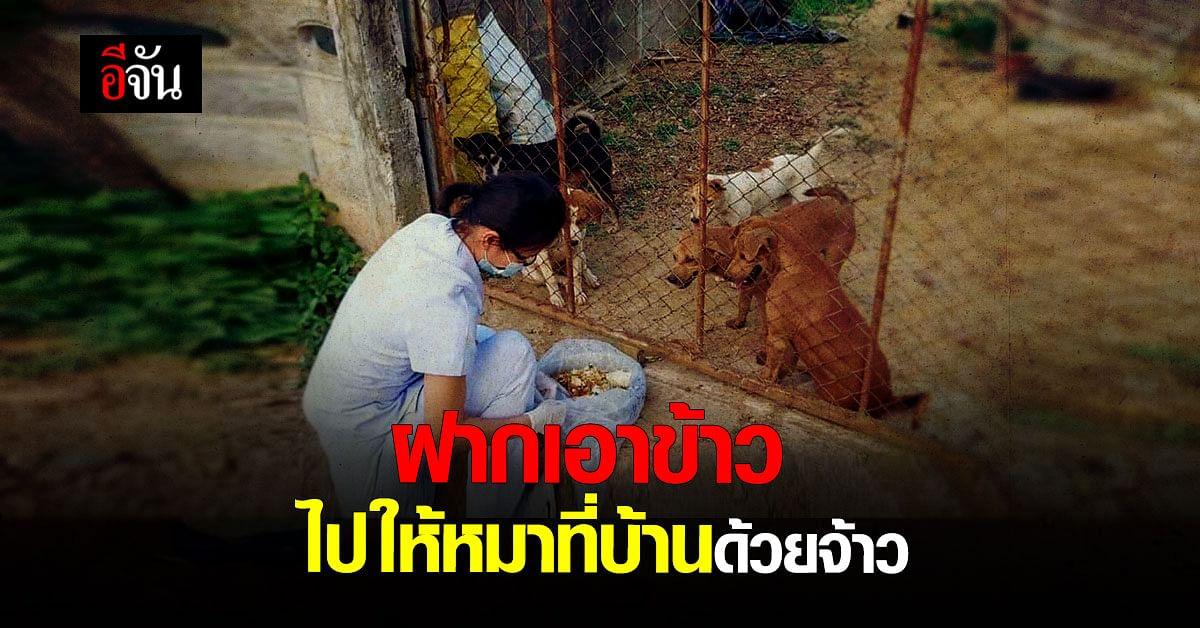เจ้าของบ้านป่วยโควิด ห่วงน้องหมาในบ้าน ก่อนไปรักษา ฝาก จนท. ให้ข้าวหมาทุกวัน