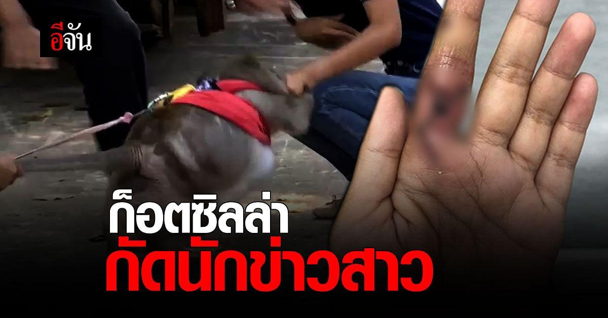 นักข่าวช่องดัง ถูกลิงก็อตซิลล่ากัด เผย ไม่โทษใคร ประมาททั้งคู่