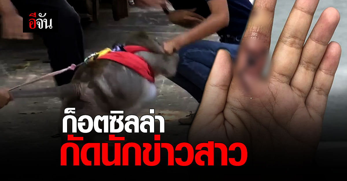 อาการแย่ลง ! นักข่าว โดน ลิงแสม ก็อตซิลล่า กัด แพทย์ เตรียมเจาะไขสันหลังตรวจเพิ่ม