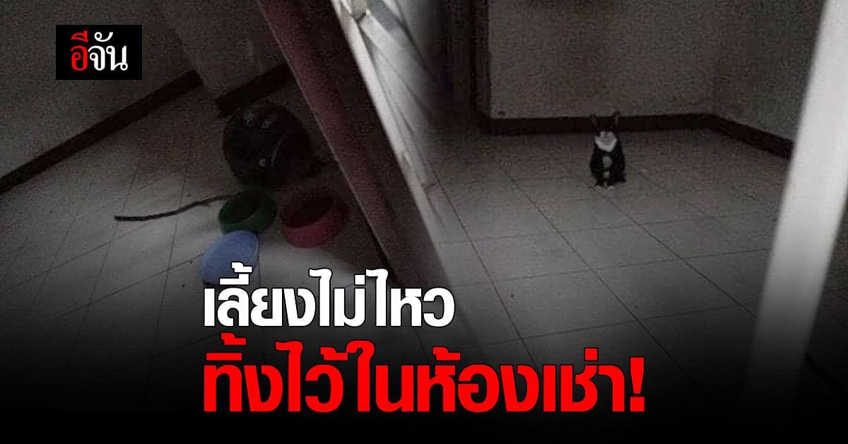 เวทนา เจ้าของห้องเช่าย้ายออก แต่ทิ้งแมวไว้ อ้างเลี้ยงไม่ไหว