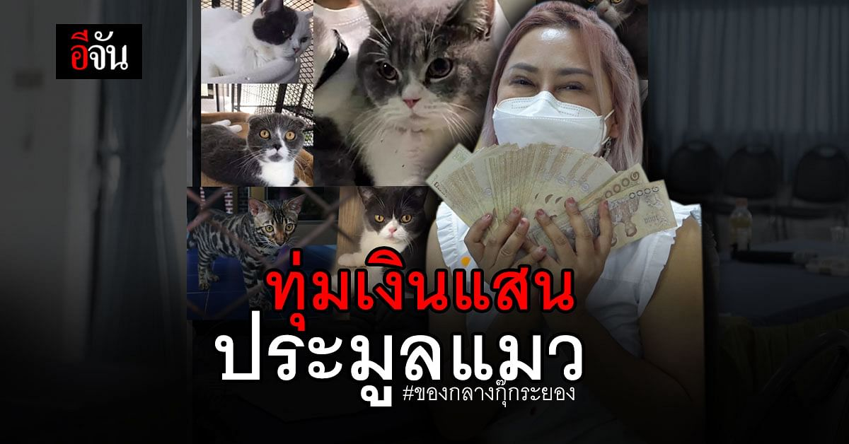 เพจ ทูนหัวของบ่าว ทุ่มเงินแสน ประมูล น้องแมว ของกลาง คดีกุ๊กระยอง