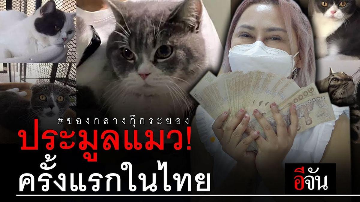 (Video) ประมูลแมว! ครั้งแรกในไทย