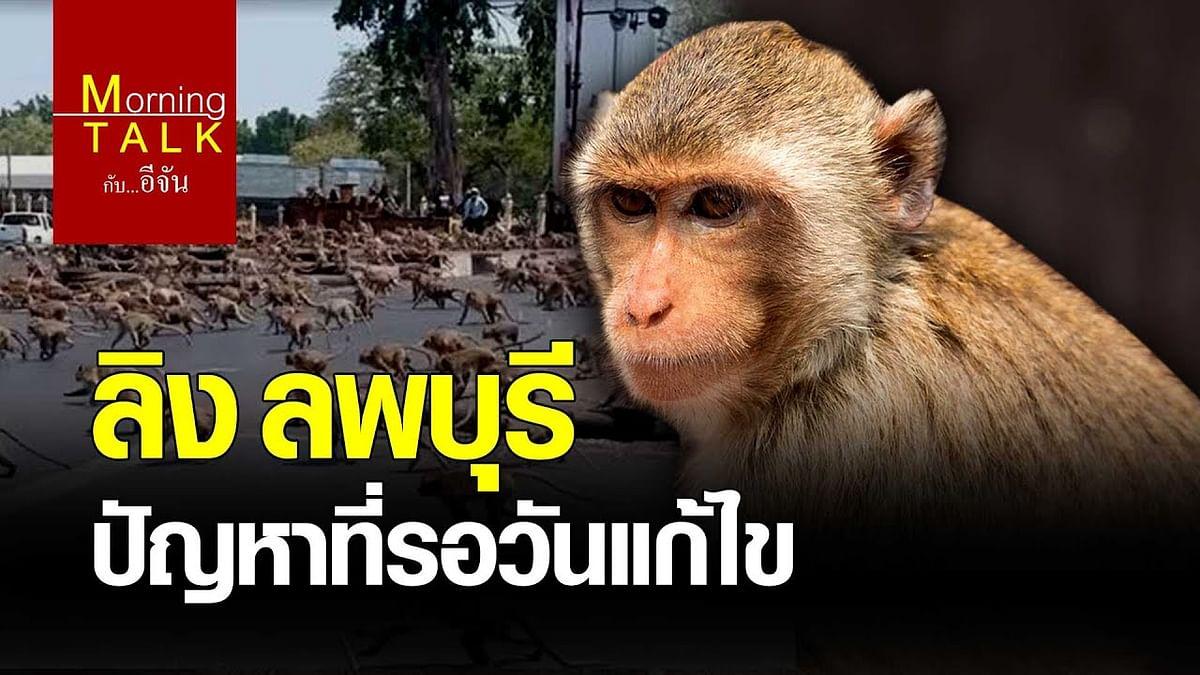 (Video) ลิง ลพบุรี ปัญหาที่รอวันแก้ไข
