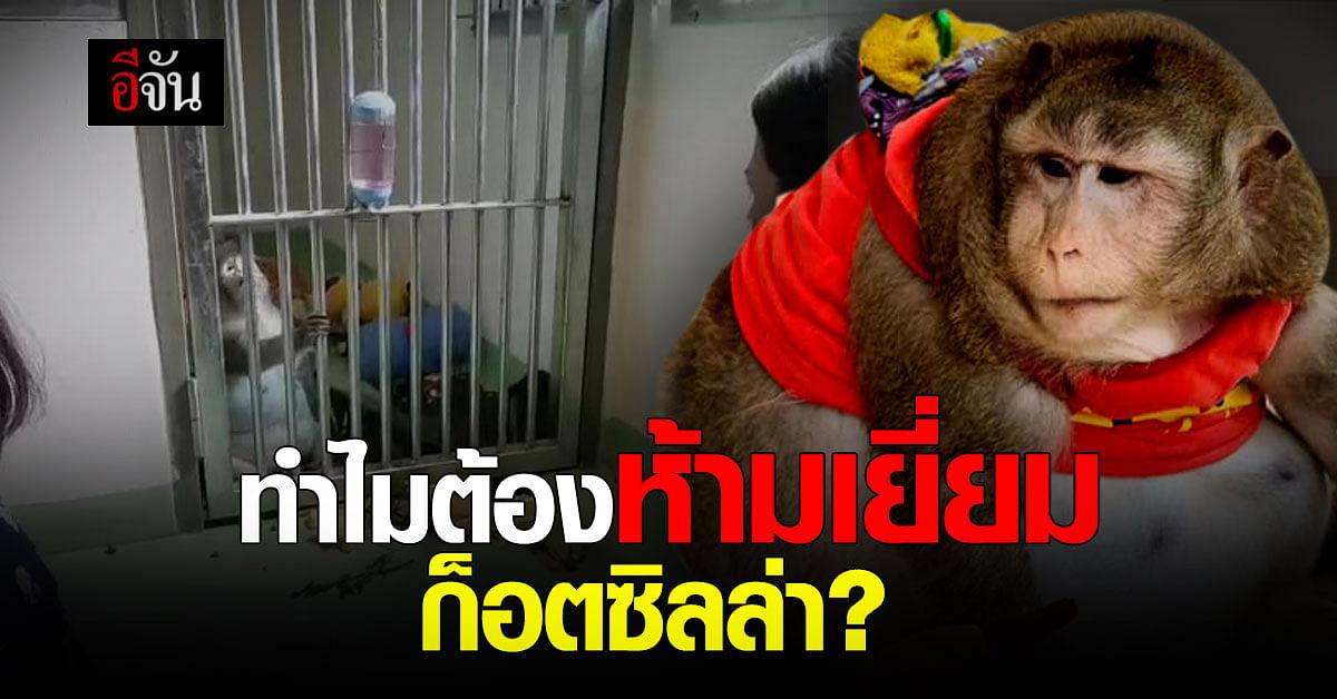 องค์กรสวัสดิภาพสัตว์ ขอเหตุผล ทำไมถึงไม่ให้ญาติเข้าเยี่ยม ก็อตซิลล่า ?