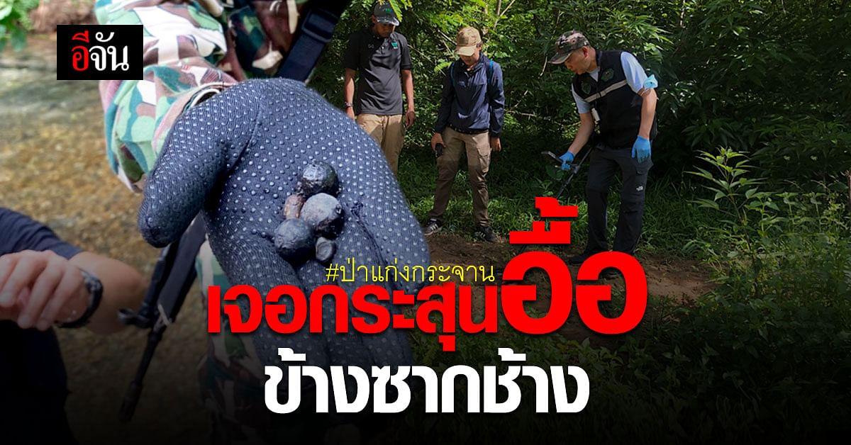 พญาเสือ ตรวจพื้นที่ที่พบ ซากช้าง ตายคาป่าแก่งกระจาน พบกระสุนอื้อ!