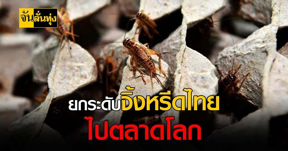 ไทยส่ง จิ้งหรีด เจาะตลาดแมลง เตรียมพร้อมเป็นฮับแมลงโลก