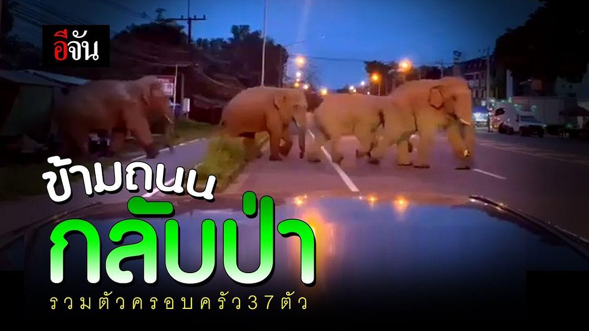 (Video) ข้ามถนน กลับป่า รวมตัวครอบครัว 37 ตัว