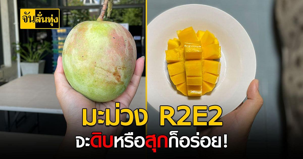 มะม่วงอาร์ทูอีทู มะม่วงพันธุ์นอกที่ปลูกดีในไทย กินสุกหรือดิบก็อร่อย !