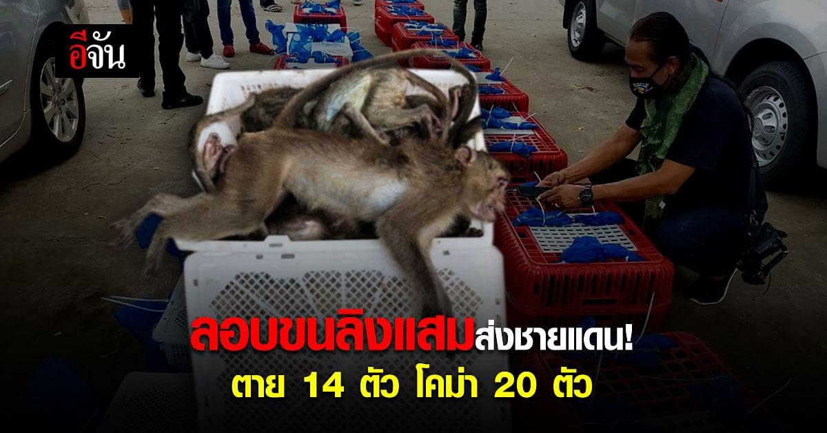 ตำรวจ สภ.ศรีมหาโพธิ ตรวจค้นรถต้องสงสัย เจอ ลิงแสม 102 ตัว! เตรียมส่งชายแดนสระแก้ว