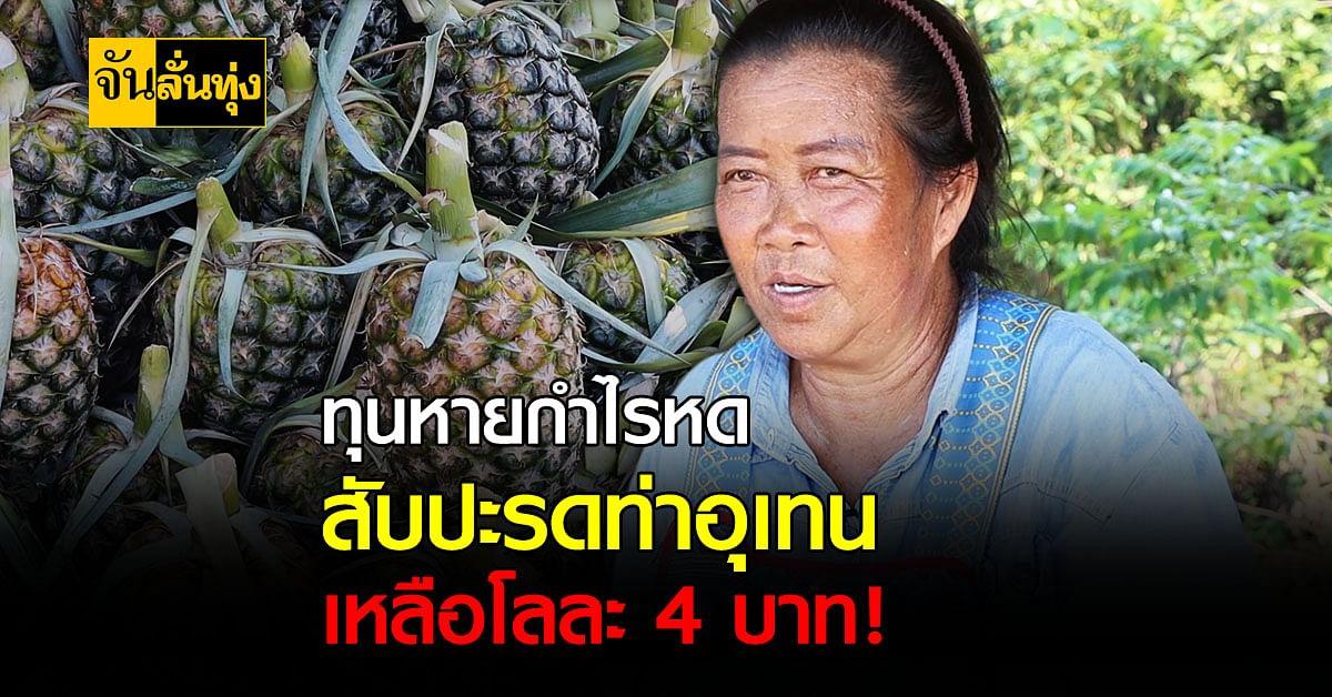 ทุนหายกำไรหด สับปะรดท่าอุเทนเหลือโลละ 4 บาท !