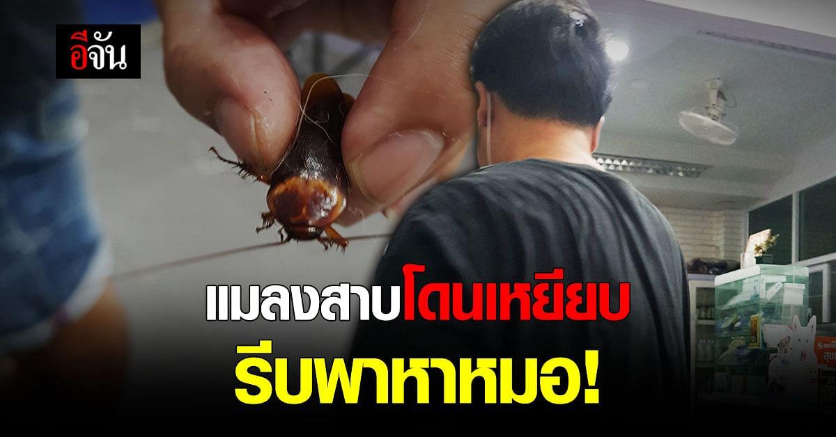 หนุ่มใจบุญ เห็นคาตา แมลงสาบ โดนเหยียบ รีบพาหาหมอทันที