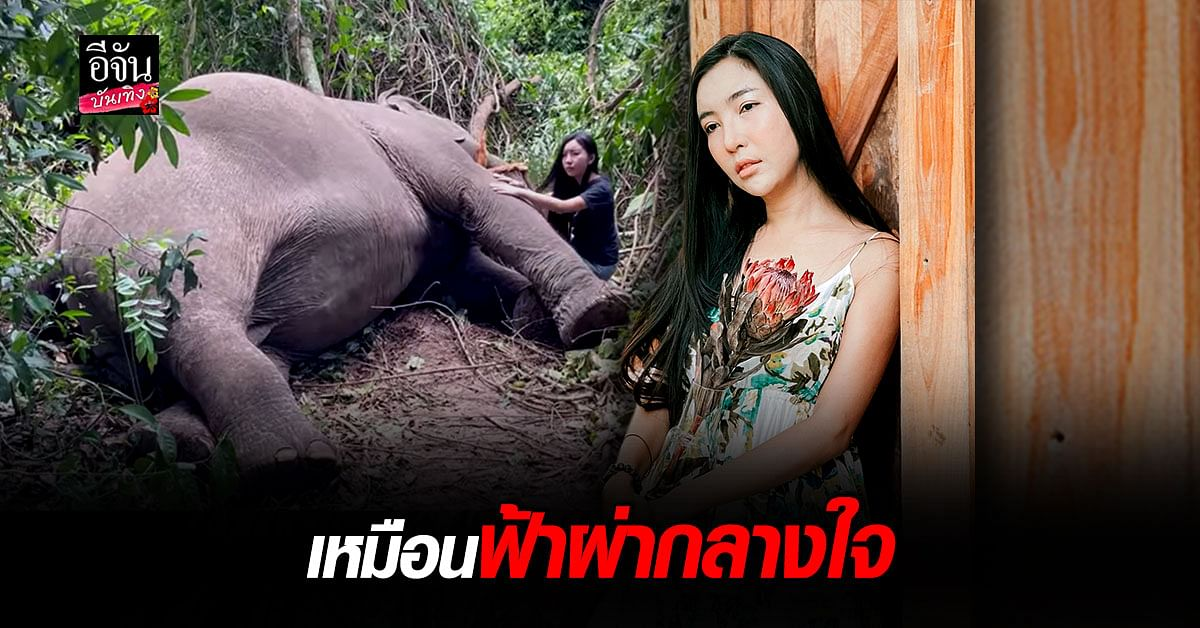ลูกปัด ปุริมปรัชญ์ สุดเศร้า ช้างบุญครอง เสียชีวิต เมื่อคืนนี้ เหตุเพราะ ฟ้าผ่า