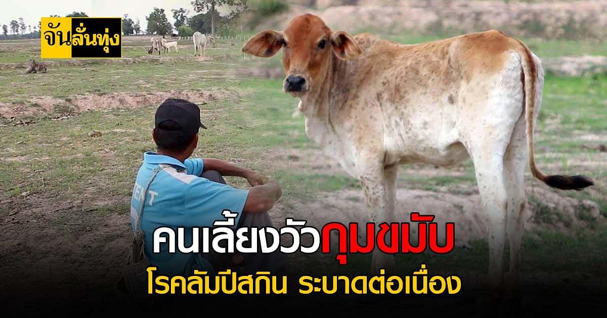 มุกดาหารพบวัวติดโรคระบาด ลัมปีสกิน วอนรัฐเร่งเข้าช่วยเหลือ