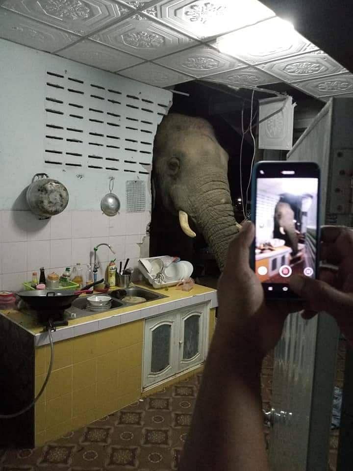 เจ้าของบ้านได้ภ่ายภาพช้างป่าไว้