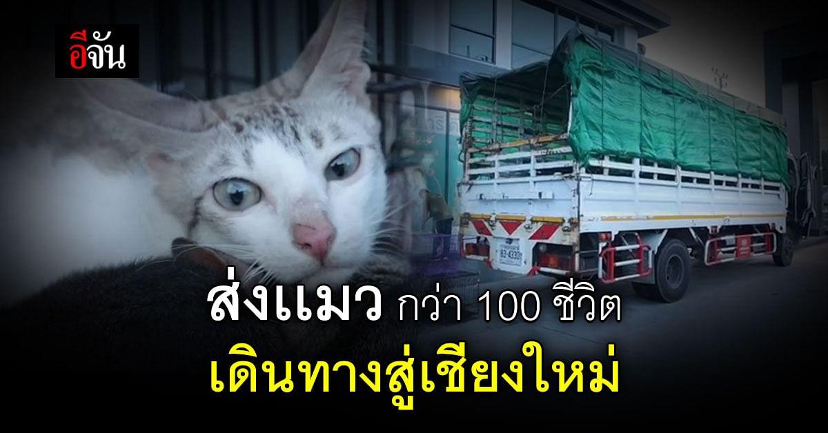 สุขที่ใหม่ ที่ไม่ทุกข์อีกต่อไป ชีวิตใหม่แมวในตึกร้าง สู่สวรรค์บนดิน