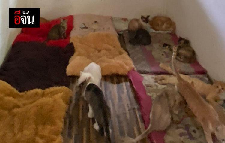 ห้องที่ถูกปูด้วยผ้าขนสัตว์ แมวชอบเข้ามานอน