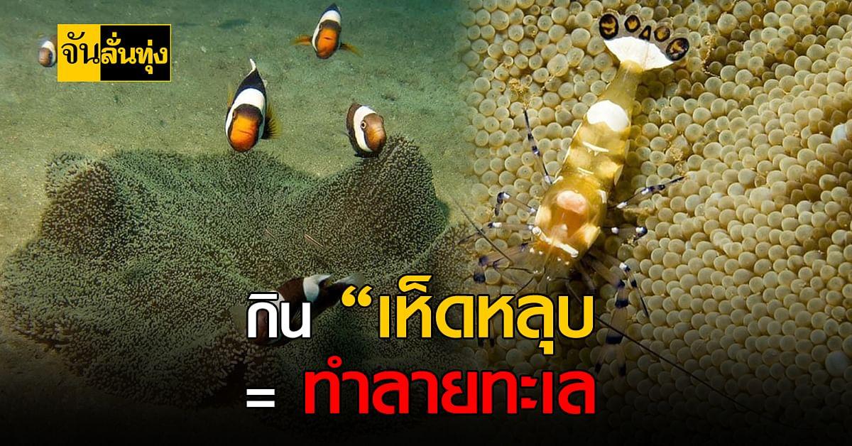 ดร.ธรณ์ วอนไม่กิน เห็ดหลุบ เพราะทำลายธรรมชาติ สัตว์ทะเล ผิดกฎหมาย