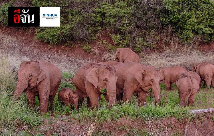 โขลงช้างป่าเอเชีย