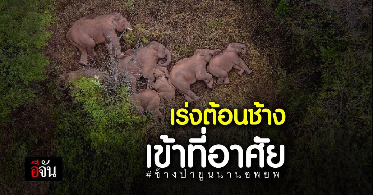 เจ้าหน้าที่จีน ติดตามการอพยพ ช้างป่ายูนนาน เร่งต้อนช้าง เข้าถิ่นอาศัย ที่เหมาะสม