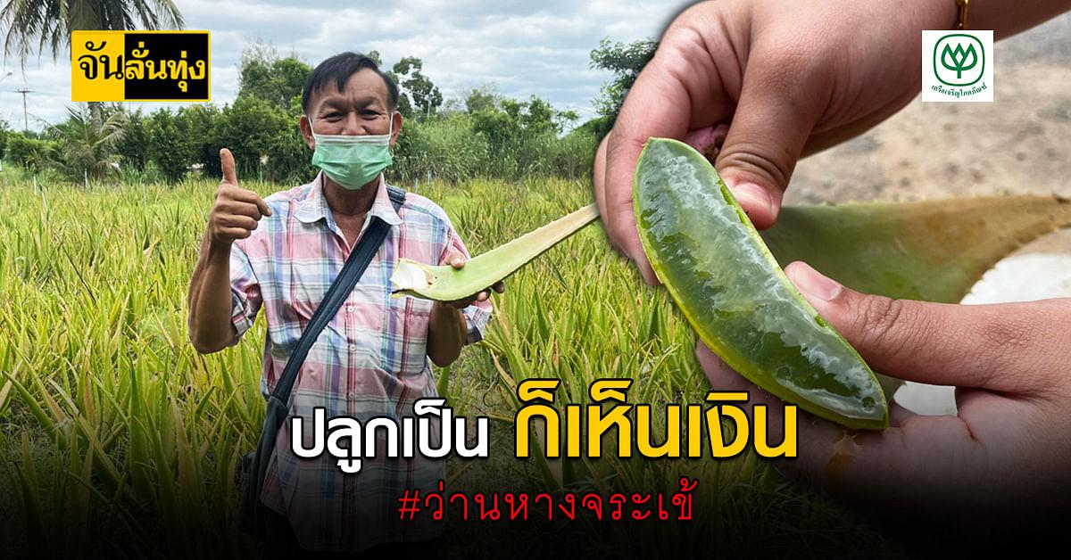 อย่ามองข้าม! ชวนปลูก ว่านหางจระเข้ พืชเศรษฐกิจ ที่ปลูกง่ายขายคล่อง