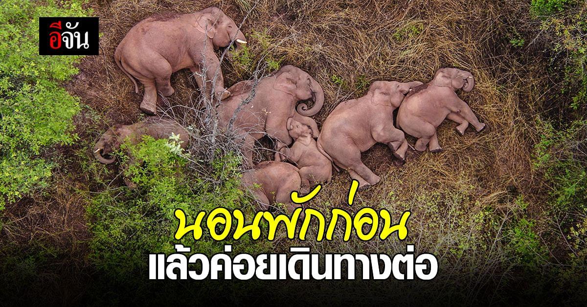 ยูนนาน เผยภาพ ช้างป่าเอเชีย โขลงใหญ่ หยุดทริปอพยพใกล้ คุนหมิง