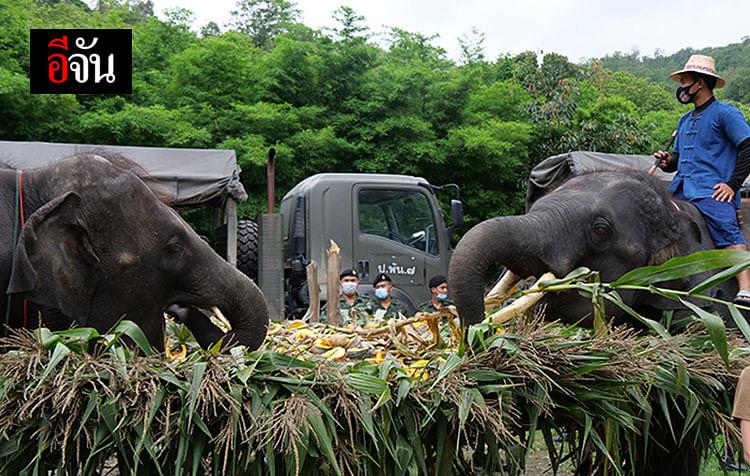 ผู้ใจบุญจำนวนมาก ช่วยกันระดมเงินสมทบทุนจัดซื้อผักผลไม้มาให้เพื่อคืนความสุขให้กับช้าง