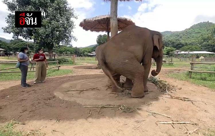 มูลนิธิอนุรักษ์ช้างและสิ่งแวดล้อม จ.เชียงใหม่