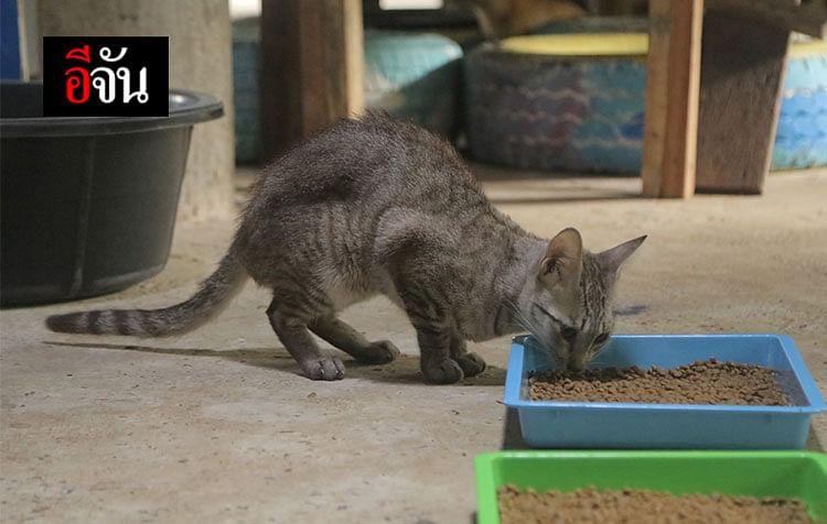 ชีวิตใหม่ของน้องแมว