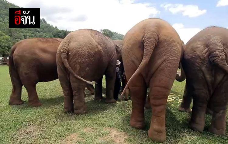ช้างที่นี่เป็นช้างที่ถูกทารุณกรรมและถูกทอดทิ้ง