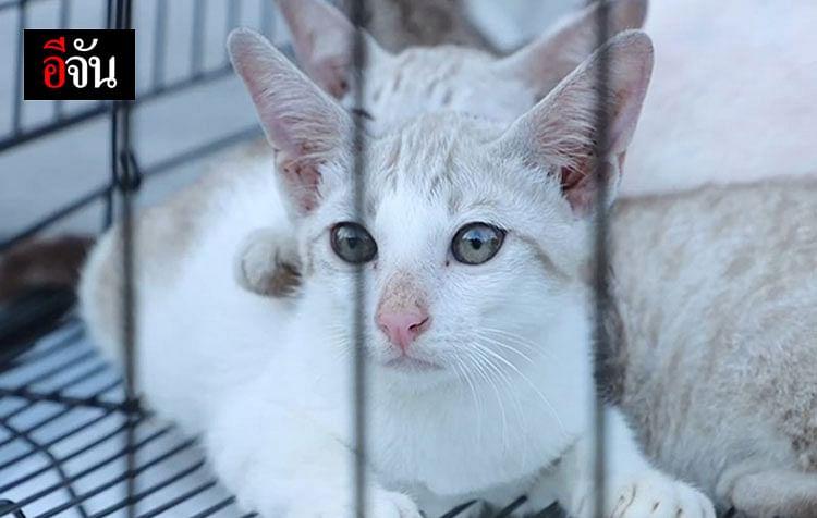น้องแมวผลการตรวจสุขภาพอาการปกติดี
