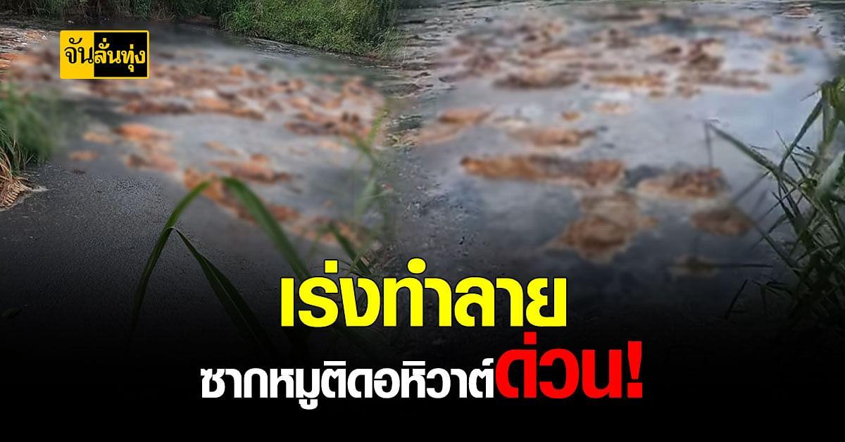 ปศุสัตว์เพชรบุรี จ่อจับ 2 ข้อหา เจ้าของฟาร์ม หมูเมืองเพชรฯ เหตุทำลายซาก หมูติดอหิวาต์ ไม่ถูกต้อง