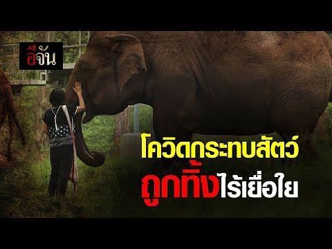 (Video) โควิดกระทบสัตว์ ถูกทิ้งไร้เยื่อใย