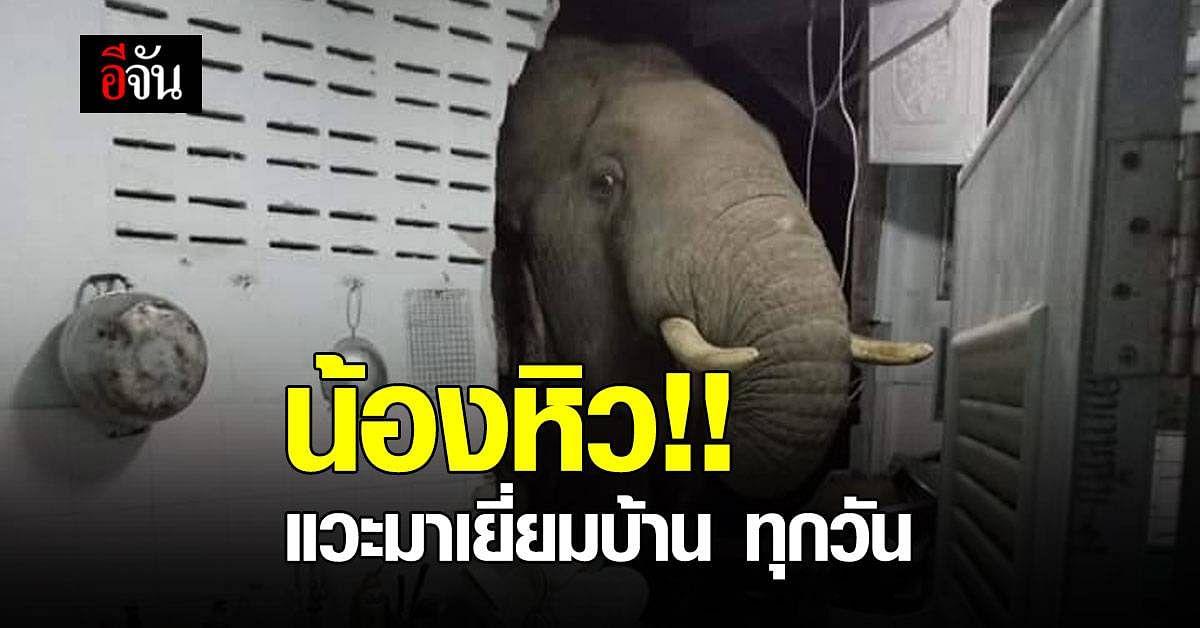 น้องหิว !! ช้างป่า บุกบ้าน มาได้ทุกวัน โผล่เข้าครัว หาของกิน