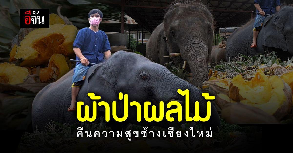 ปางช้าง จ.เชียงใหม่ ทุกข์เพราะโควิดนาน 2 ปี วันนี้มี ผู้ใจบุญ ระดมทุน ทอดผ้าป่าผลไม้ คืนความสุขให้ช้าง
