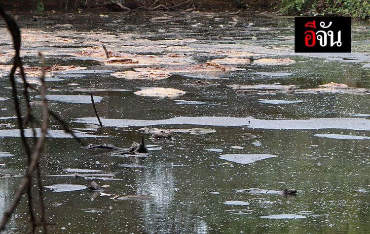 เจ้าของฟาร์มหมู ทิ้งซากหมูตาย ในบ่อบำบัดน้ำเสีย ส่งกลิ่นเหม็นเน่า