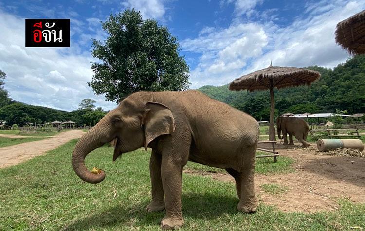 พังแม่โดะ ช้างหลักหัก