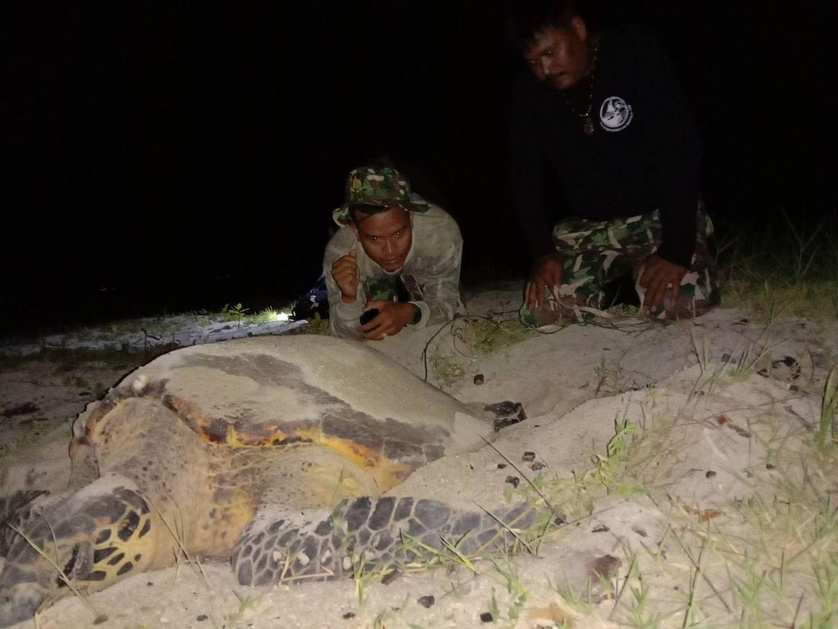 เจ้าหน้าที่อุทยานแห่งชาติอ่าวสยาม ทำการเฝ้าระวังภัยคุกคาม ให้เต่าแม่ศรีจันทร์