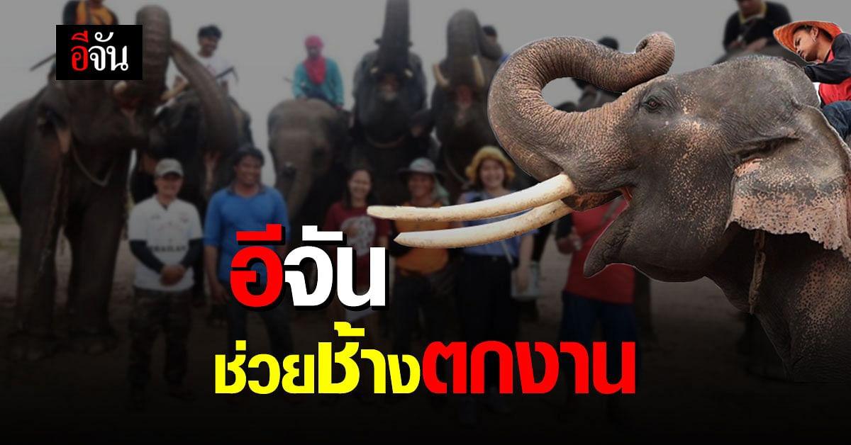 อีจันช่วยช้างตกงาน จากพิษโควิด 120 เชือก ระเวลา 12 เดือน